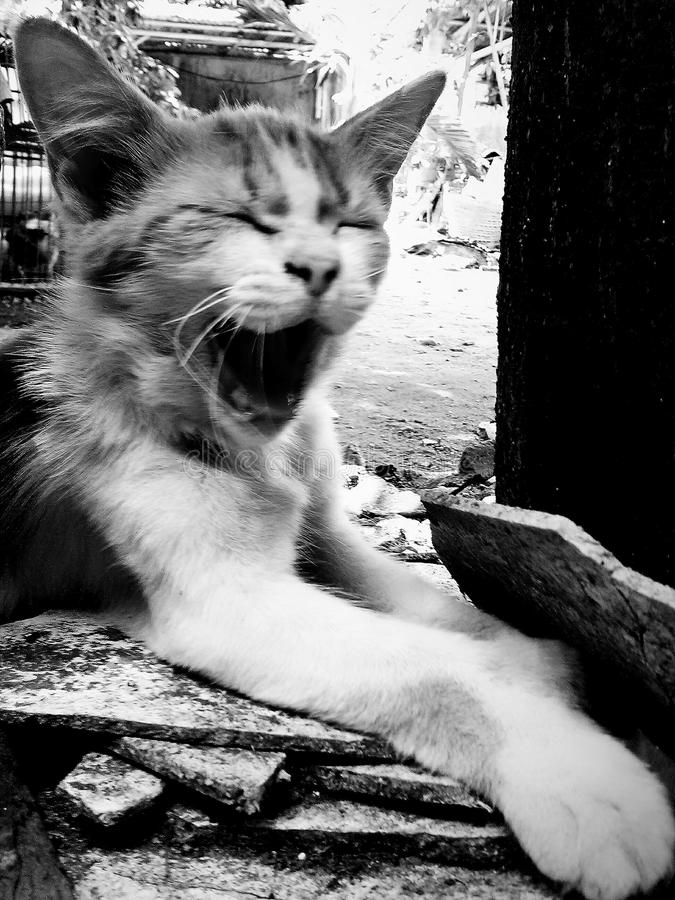 Sleepy cat. Cute little animal with his sleepy face stock image