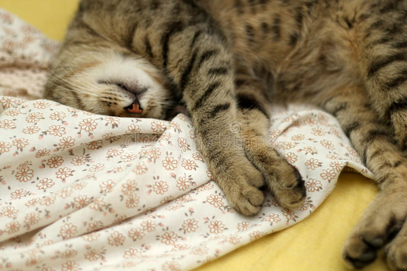 Sleepy Cat. Cute tabby cat sleeping on floral sheets. Selective focus stock image