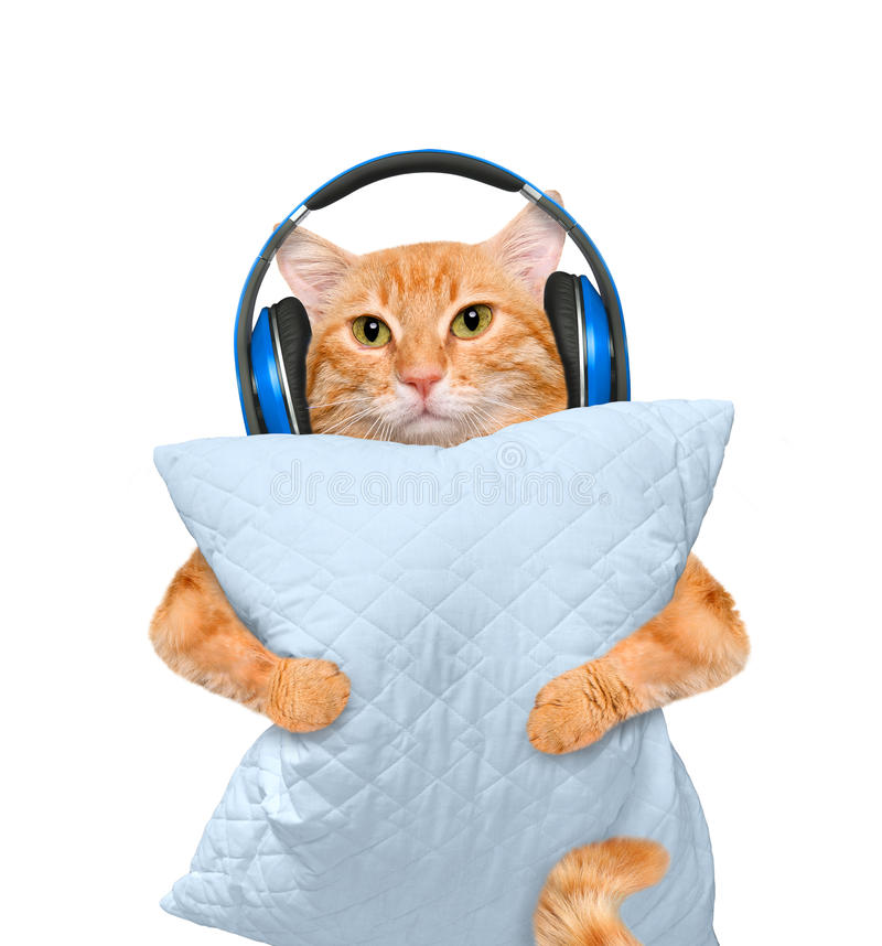 Free Sleepy Cat In A Headphones With A Pillow. Stock Photo - 72567670