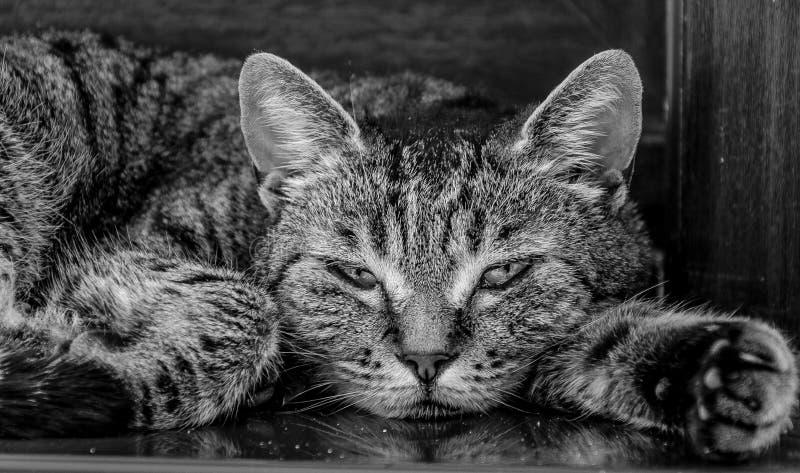 Sleepy cat on the ledge closeup royalty free stock photography