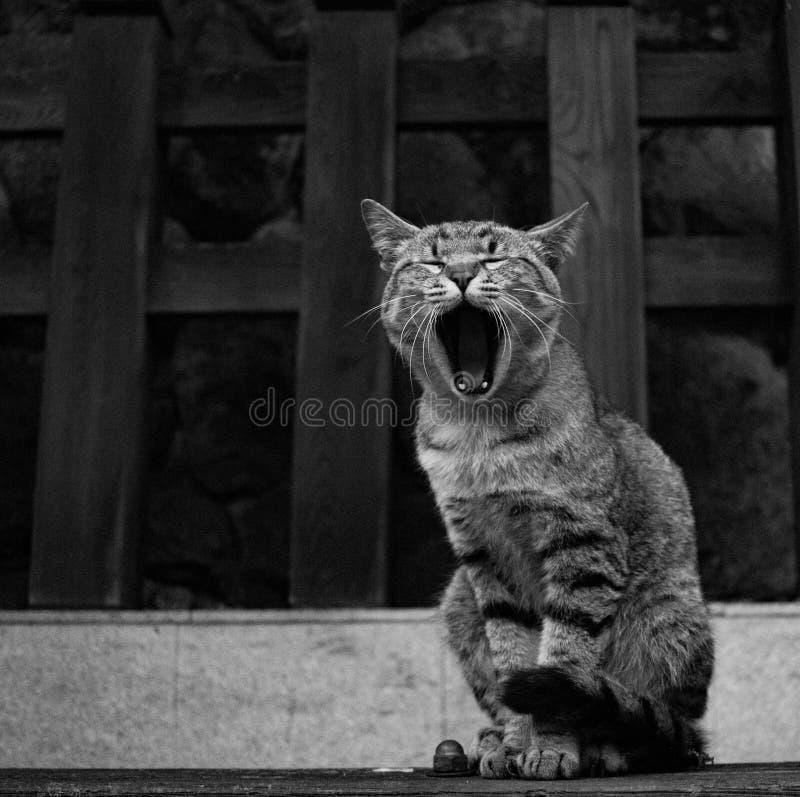 Sleepy cat in Nara, Japan. royalty free stock photo