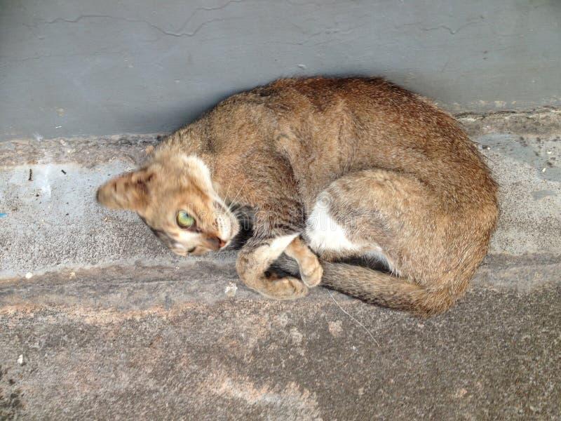 Sleepy Cat royalty free stock images