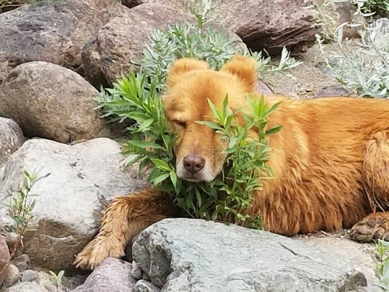 Sleepy dog stock photo