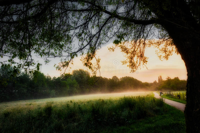 Sleepy forest royalty free stock image