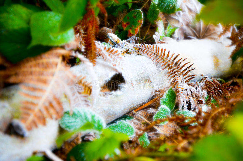 Sleepy frost on the forest floor royalty free stock images