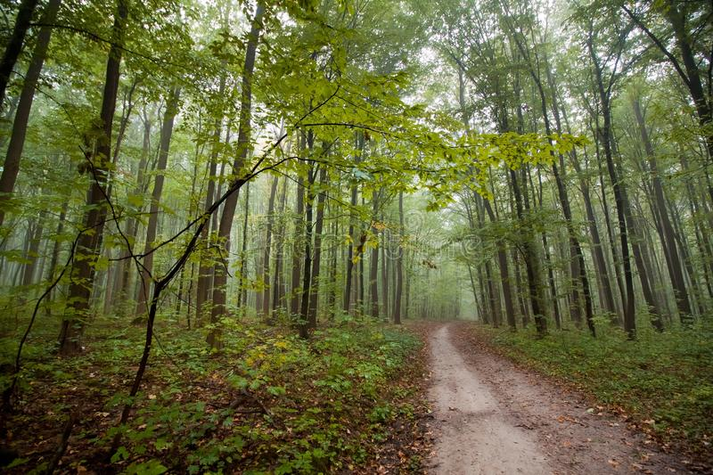 Sleepy homeless forest road on a misty autumn morning, typical foggy October weather, yellow wet fallen leaves on the ground. Beauty of nature image royalty free stock photos