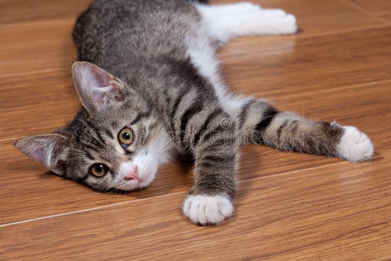 Download Sleepy kitten stock image. Image of comfort, adorable - 20787531