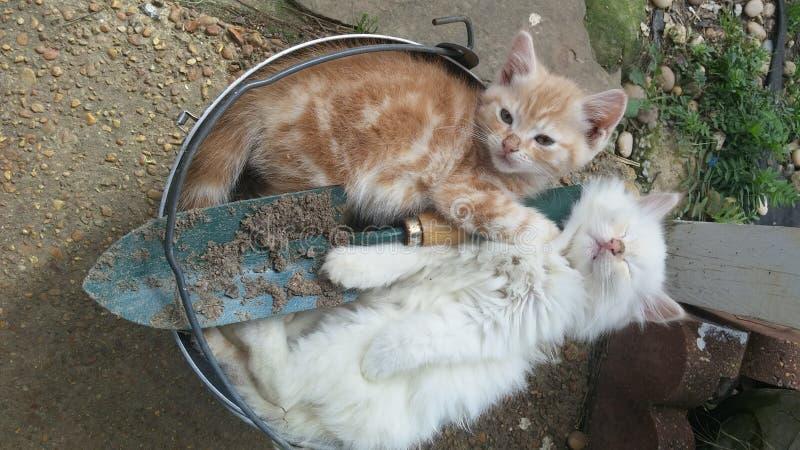 Sleepy kittens stock images