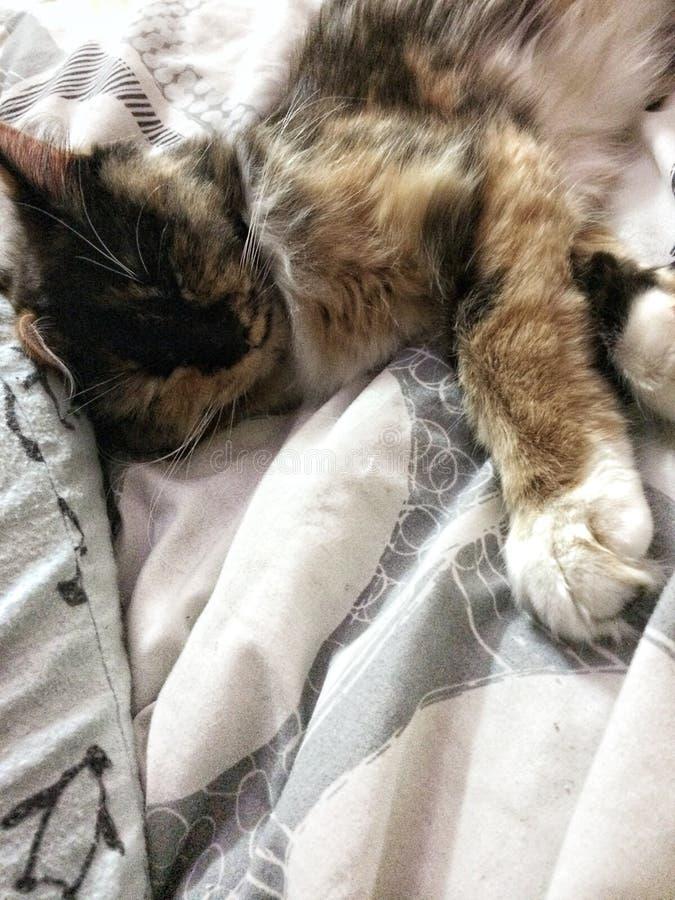Sleepy kitty royalty free stock photo