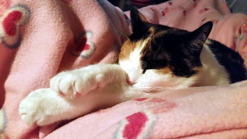 SLEEPY KITTY PAWS PLEASE royalty free stock image