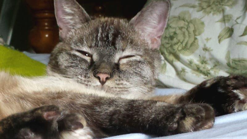 Sleepy Luna cat stock photo