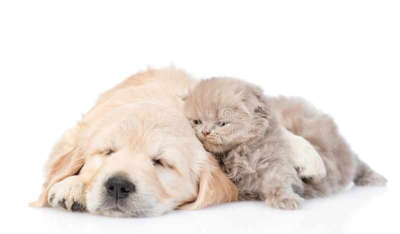 Sleepy puppy hugging a cute kitten. isolated on white background.  royalty free stock photos