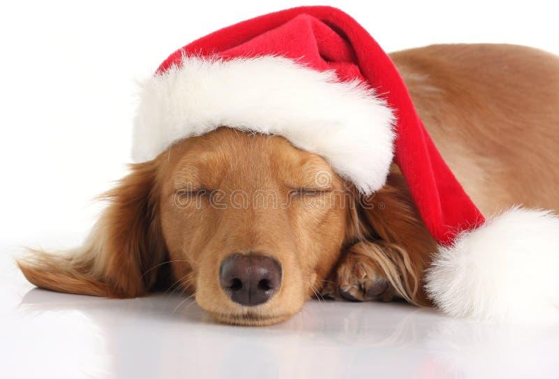Sleepy Santa dog royalty free stock images