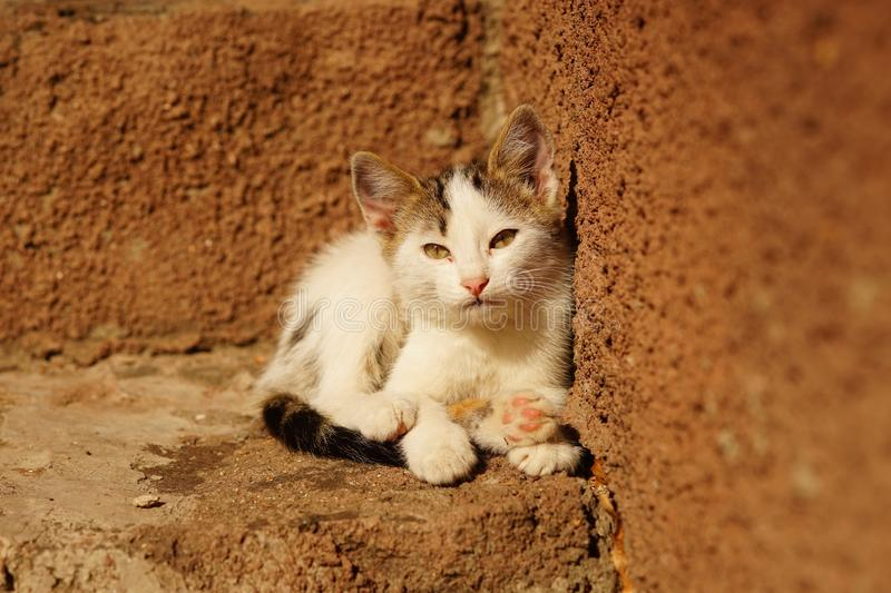 Sleepy white kitten lies on stone sunny steps outside the house. Sleepy white kitten lies on stone sunny steps outdoors stock photography