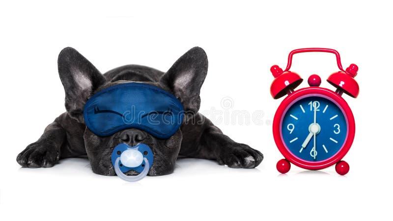 Sleepyhead baby dog stock photography