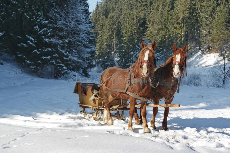 Sleigh with horses. Old sleigh with horses in the forest. Winter scene royalty free stock photo