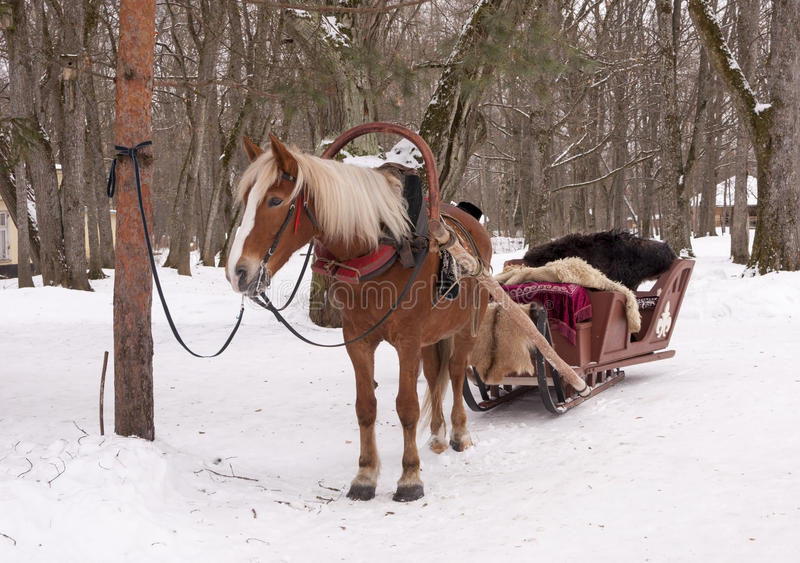 Sleigh. One horse open sleigh waiting for a coachman stock photography