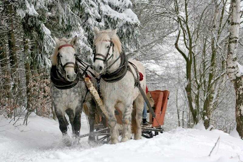 Sleigh Ride Through Snowy Forest Free Public Domain Cc0 Image