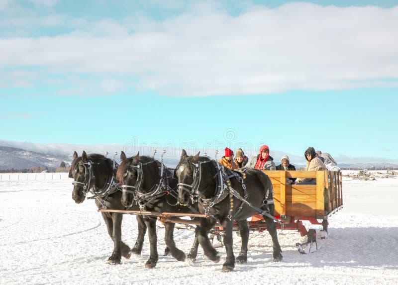 Sleigh ride in a three horse open sleigh royalty free stock photos