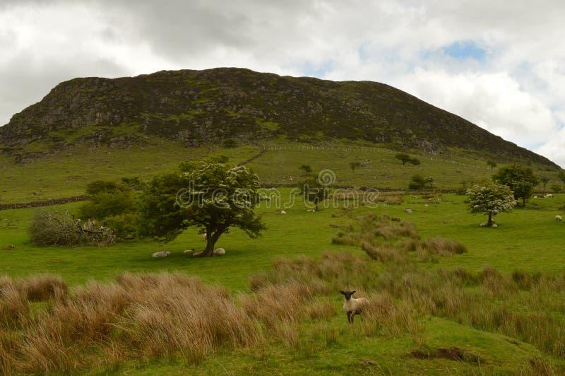 Slemish Mountain in Ireland royalty free stock photography