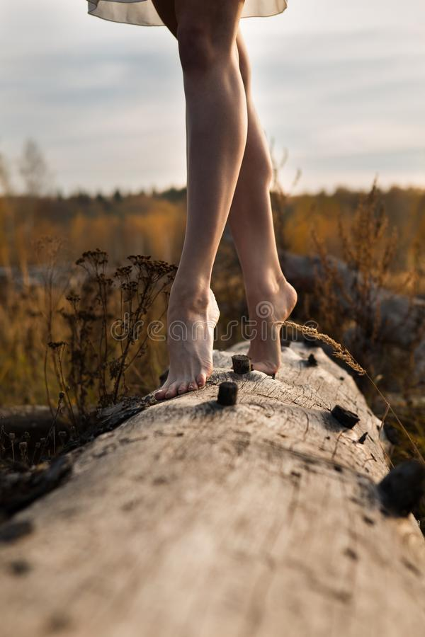 Slender beautiful legs on a dry tree stock images