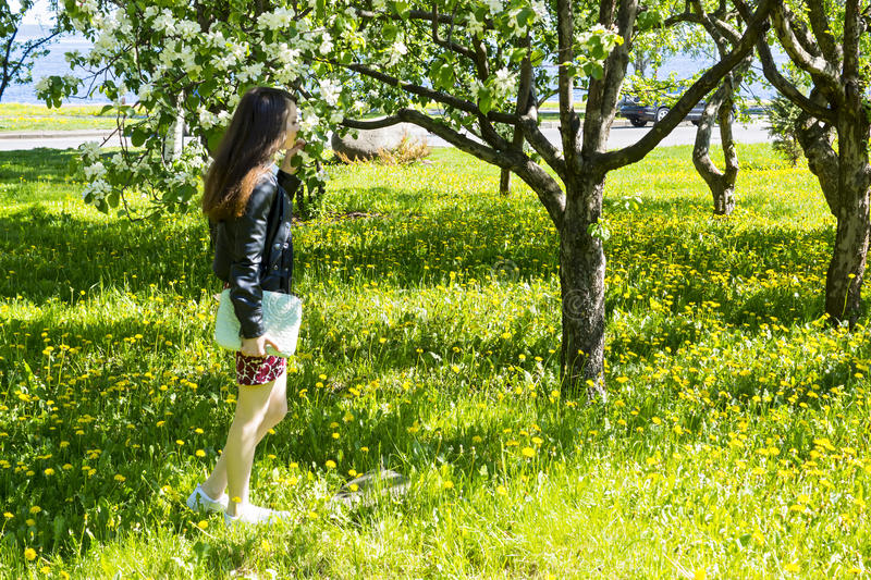 Slender girl enjoying the fragrance of apple-tree royalty free stock photography