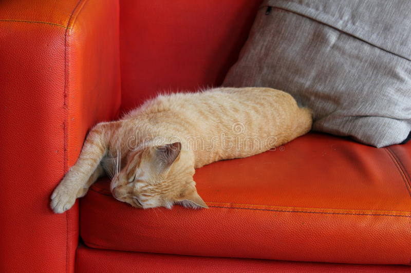 Slept cat. Cat slept on orange sofa stock photography