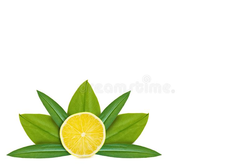 Slice of lemon on the background of green leaves. Isolated on white. concept of natural origin. Copy space stock photos