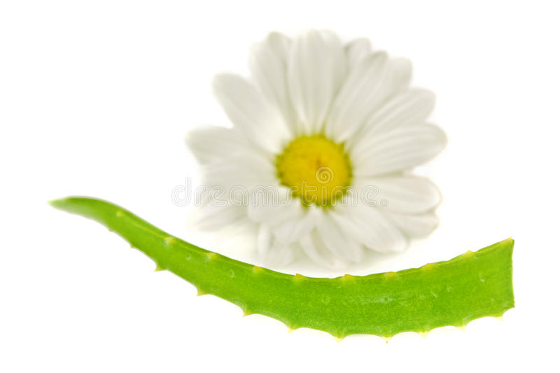 Download Slice Of Medical Aloe Stock Photography - Image: 22482662