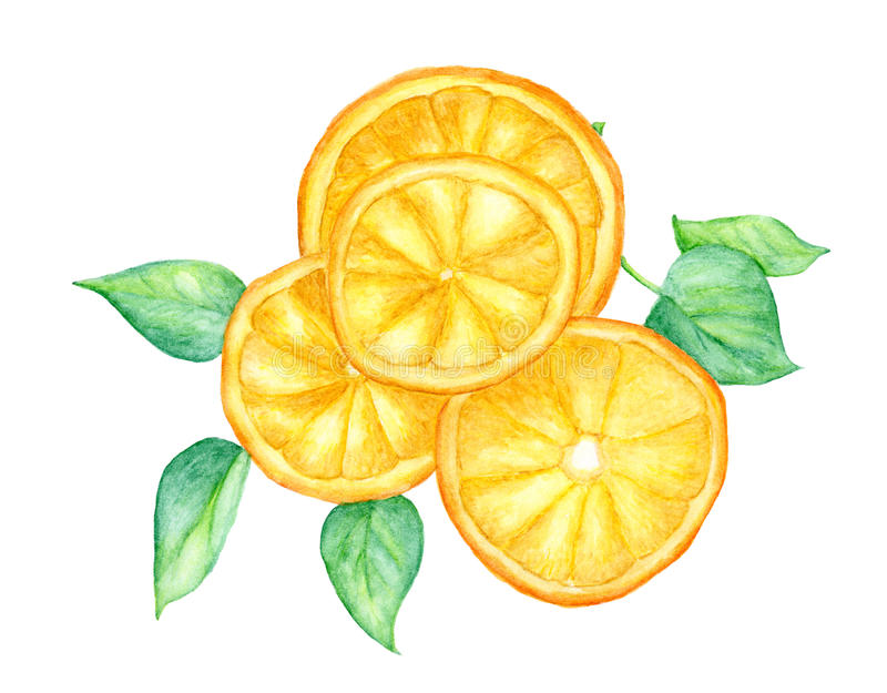 Slice of orange fruit and green leaves isolated on white background , with clipping path, watercolor illustration royalty free illustration