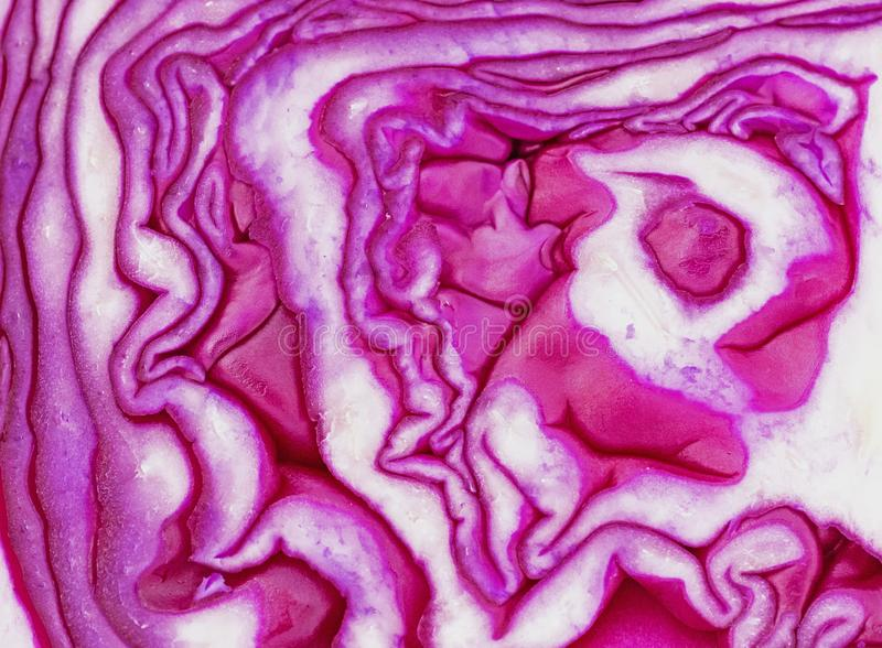 A Slice Of Red Cabbage -  Brassica Oleracea royalty free stock photo