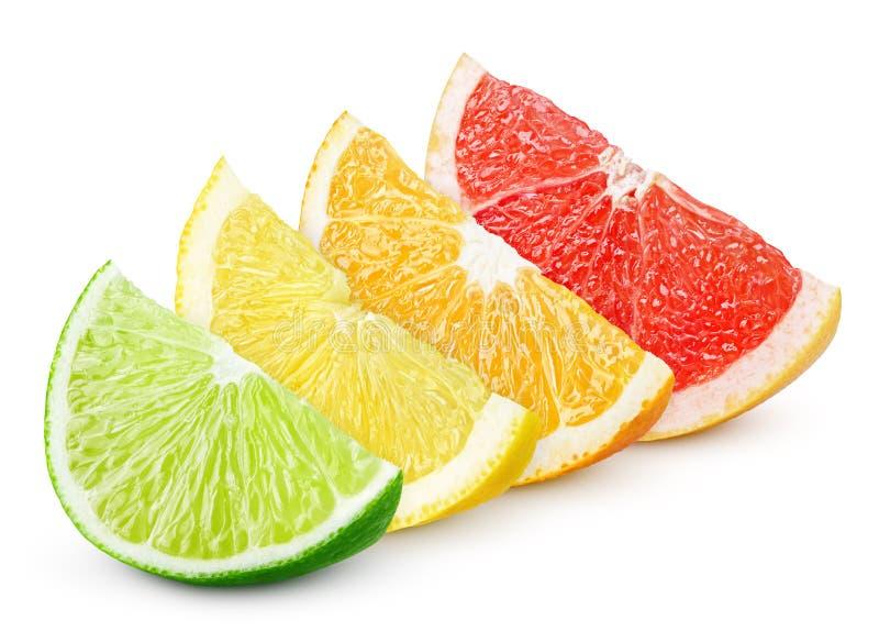 Sliced citrus fruit - lime, lemon, orange and grapefruit stock images