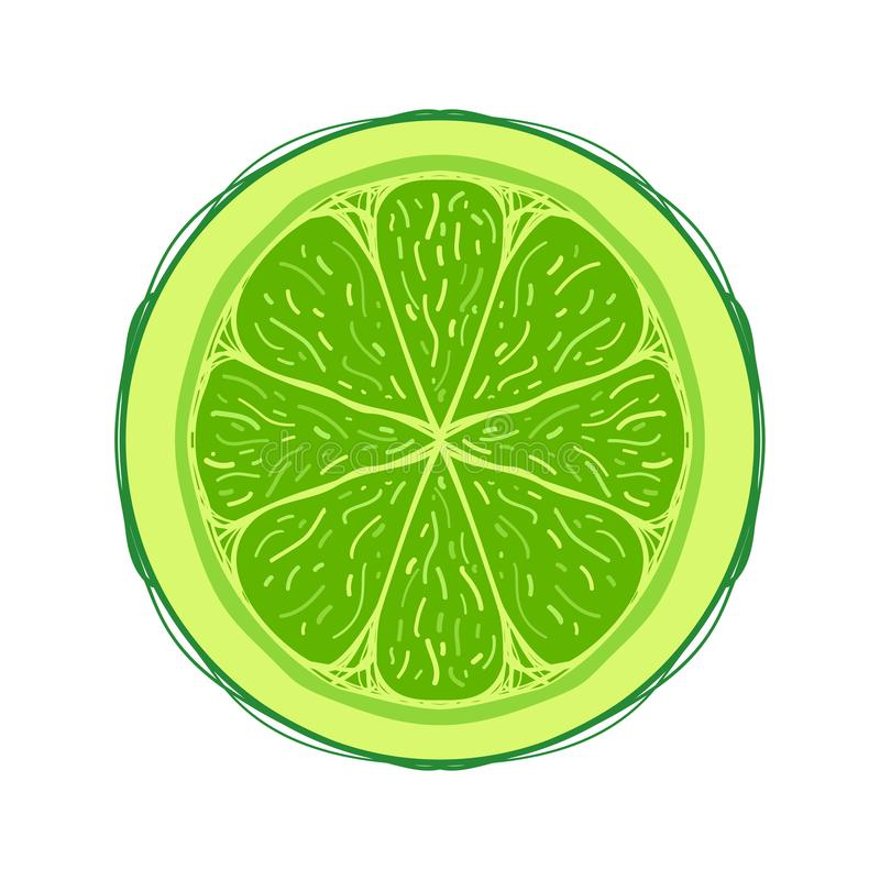Sliced colored sketch style fruit Lime. Isolated on white background. Half of fruit. Bio food vector illustration collection. For tropic cocktails vector illustration