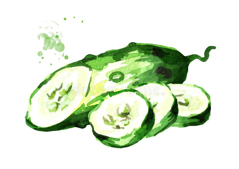 Sliced cucumber. Watercolor hand drawn illustration, isolated on white background.  stock illustration