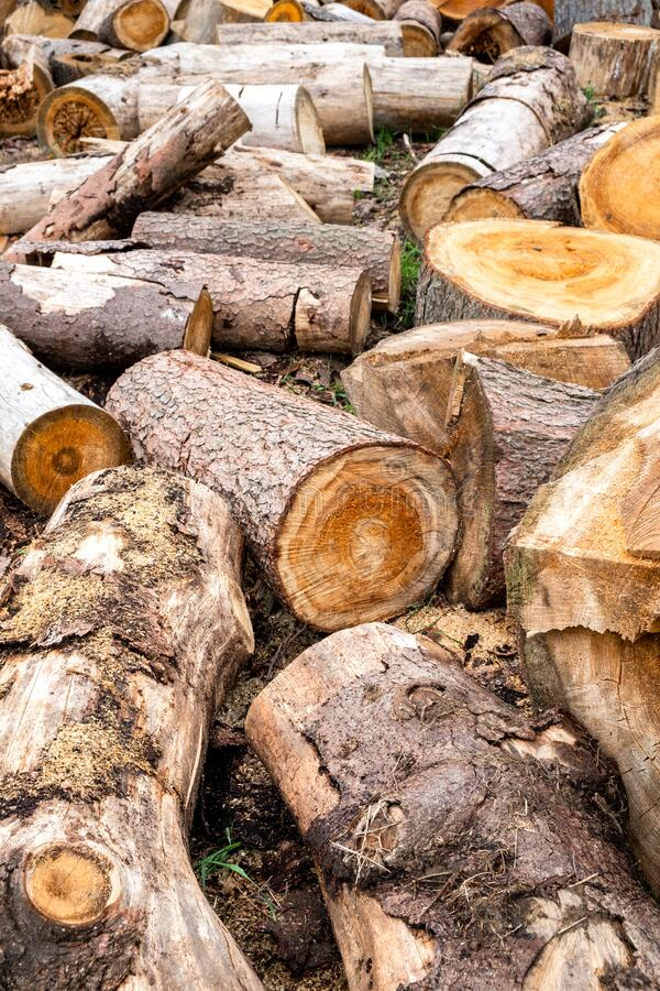 Sliced firewood stock royalty free stock image
