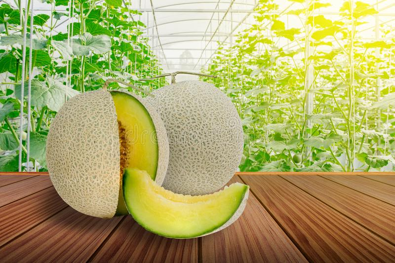 Sliced green melon or cantaloupe on brown wooden terrace royalty free stock image