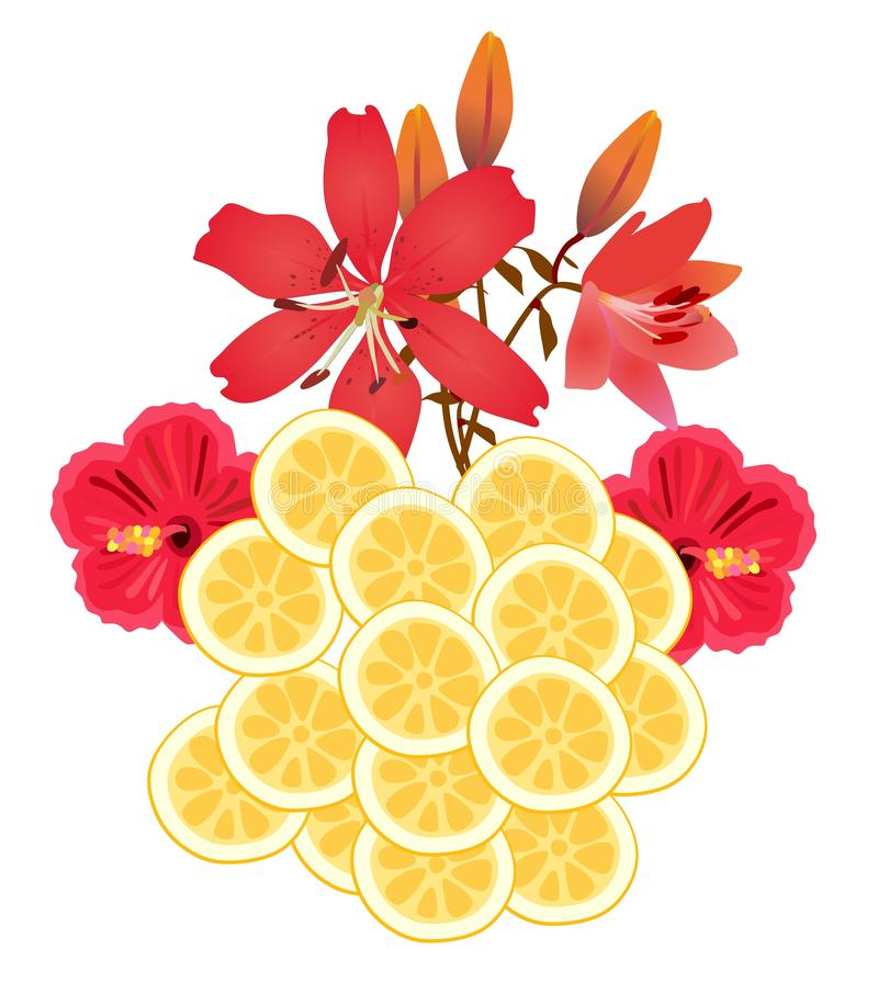 Sliced Lemons and red flowers isolated on white background.  royalty free illustration