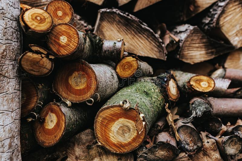 Sliced Logs Stacked Around Each Other stock images