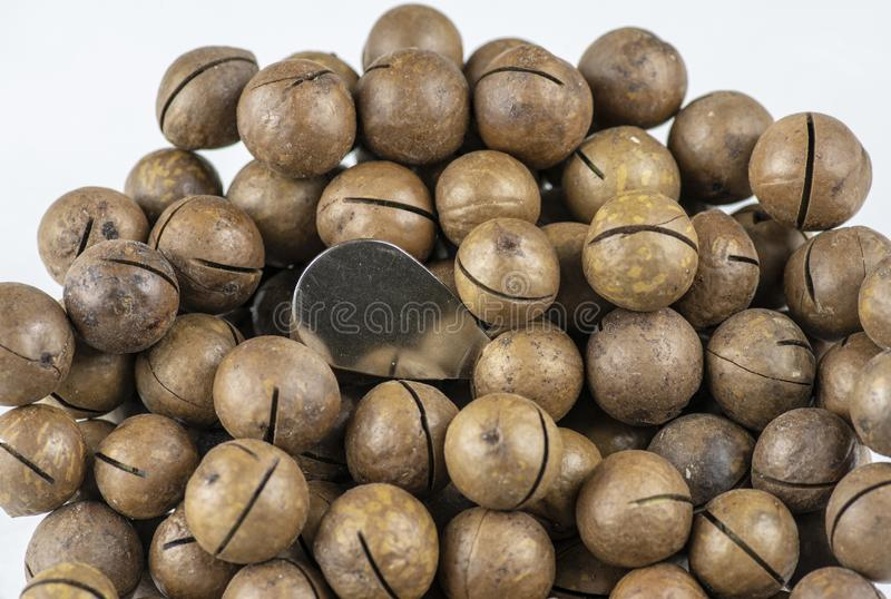 Sliced macadamia nuts with opener on a white background stock photos