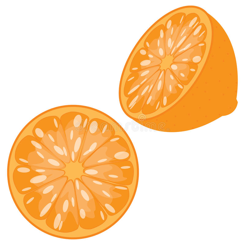Sliced Orange. Orange sliced in half, front and 3/4 view, isolated on a white background stock illustration