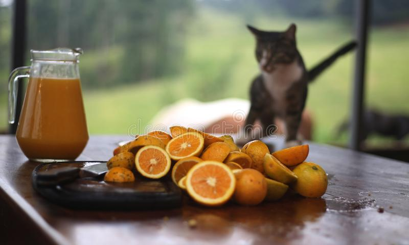 Selfmade orange juice and sliced oranges with cat in background. Sliced oranged and freshly made orange juice on a table with a cat in the background royalty free stock photography