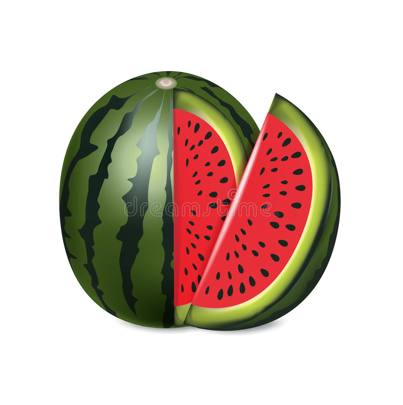 Download Sliced Red Melon Isolated On White Stock Vector - Illustration of nature, snack: 33170438