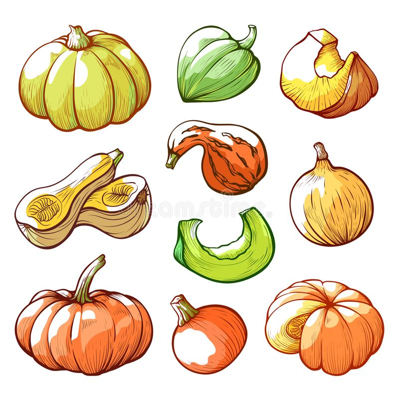 Sliced and whole pumpkins hand drawn vector illustrations set royalty free illustration