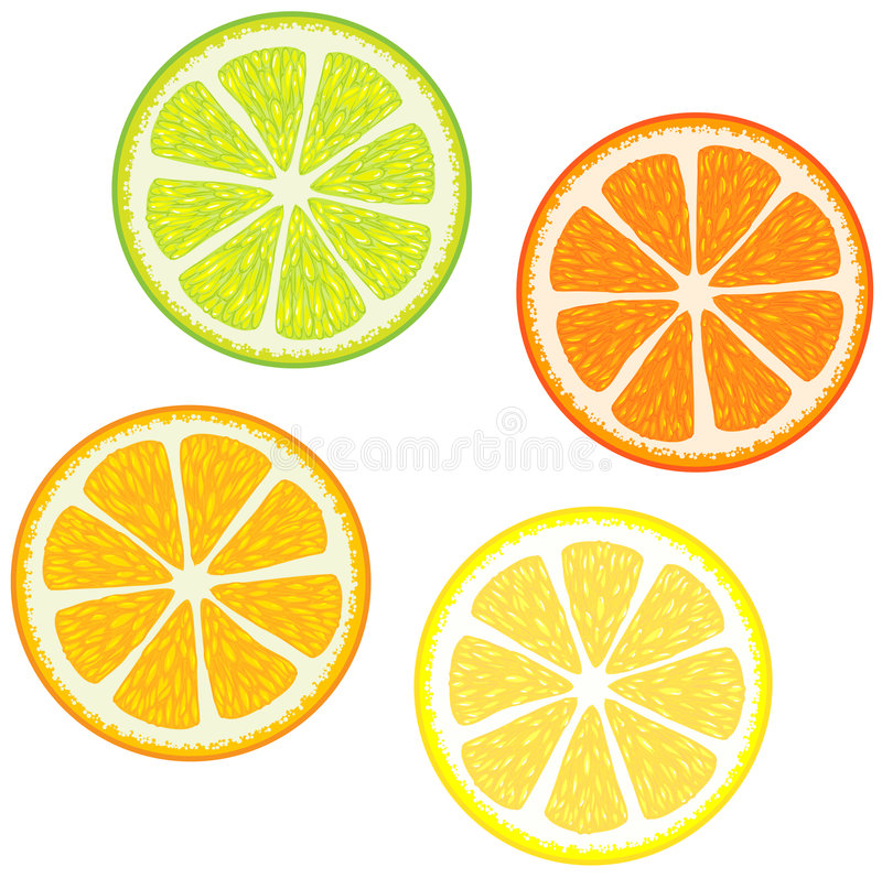 Slices of citrus fruits. Vector illustration of Slices of citrus fruits: Orange, red grapefruit, lemon and lime. Great for making patterns stock illustration