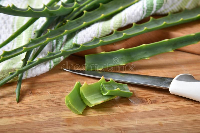 Aloe Vera Plant royalty free stock images