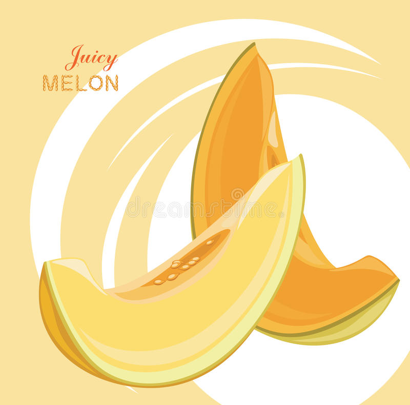 Slices of juicy melon on the abstract background vector illustration