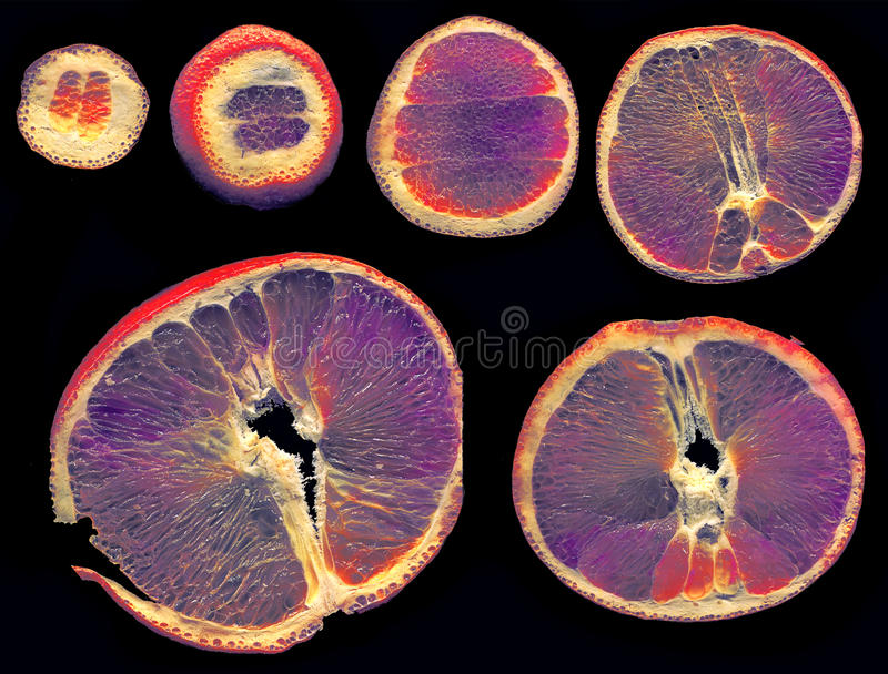 Slices of orange colored in alternate way on a black background. Disponde sized royalty free stock photo