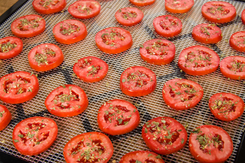 Slices of tomatoes on drying rack. Slices of seasoned tomatoes on a drying rack for preserving royalty free stock image