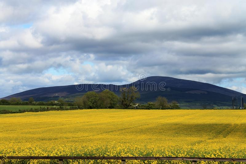 Slievenamon. Is Irish language meaning the mountain of Women, situated in County Tipperary, Ireland. A beautiful setting with the large field of rapeseed royalty free stock image