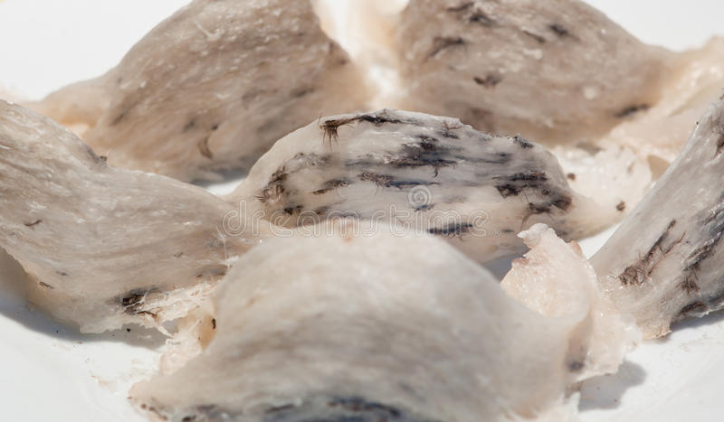 Slik het Nest van de Vogel stock foto